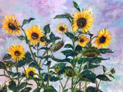 Sunflowers at Daybreak - SGH