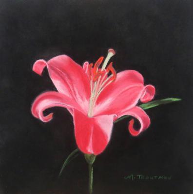 Brillant Lily
