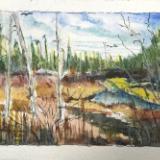 Cherry Creek Swamp, Oscoda county Mi.