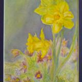 Pasque Flowers and Daffodils