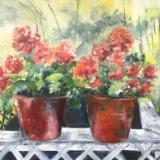 Geranium Pots -oil on stretched canvas , 20x24