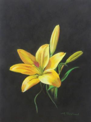 Sun Lit Lily