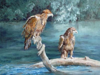 The Sunbathers, Juvenile Eagles JMH