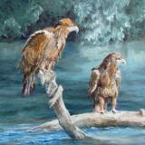 Animals, Birds and Wildlife