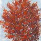Maple Beauty