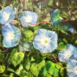 Sold-Trellis Morning Glories- oil on canvas 20x24